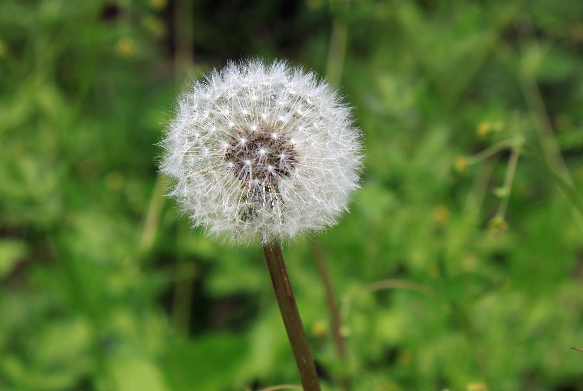 suplementos naturales para la alergia primaveral