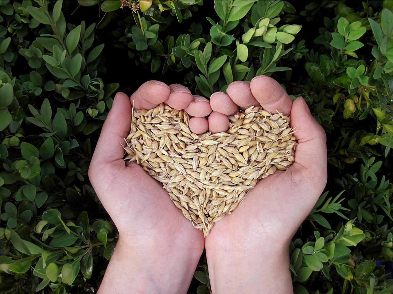 Tipos de Cereales